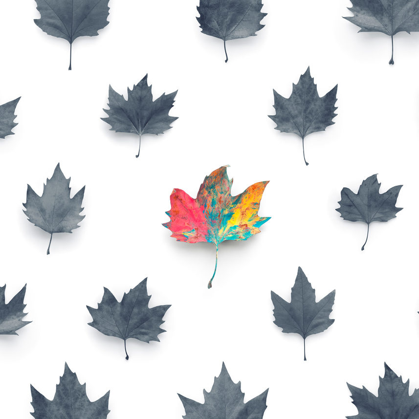 Standing out from the crowd concept: One colorful leaf among grey colored leaves on white background.